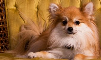 Five-hints-that-your-pet-is-too-human-OPTIMIZED