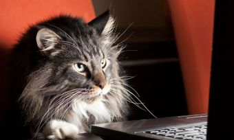 Pets-playing-online-OPTIMIZED