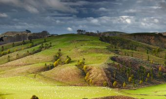 nz-farmers-feel-support-from-banks-during-tough-season-OPTIMIZED