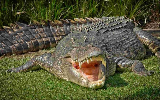 Stay away from crocs.