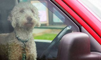 Don't-leave-your-pet-in-the-car-this-summer