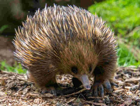 Don't pick up echidnas