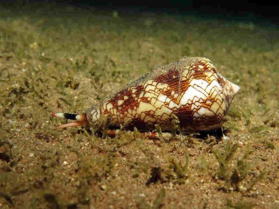 Be on the lookout for these toxic marine life on the beach.