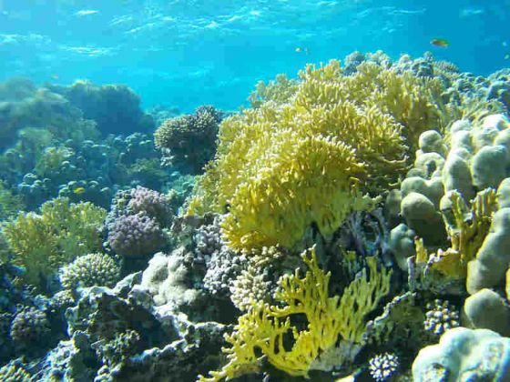 It's the home of Nemo, and it's pretty close to our doorstep. The Great Barrier Reef is not just one big, long, connected reef; it is made up of more than 2,900 individual reefs constructed by billions of miniscule coral polyps, which are living organisms.