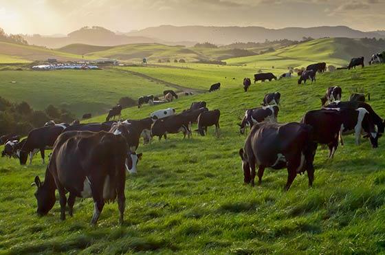 agribusiness seasonal finance