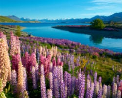 New Zealand – New Zealand Post